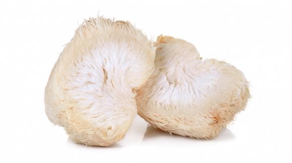Lion's Mane Mushroom (Soplówka jeżowata) - wpływ na mózg i układ nerwowy