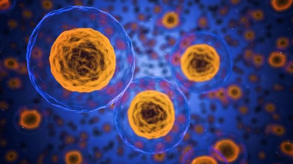 Mitochondrium - energetyczny silnik komórki