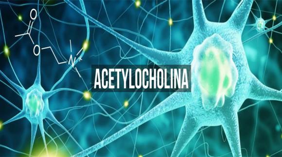 Acetylocholina - potężny neuroprzekaźnik